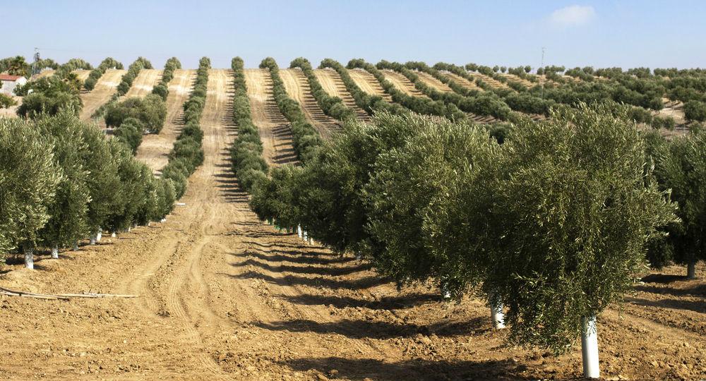 การปลูกต้นไม้จะช่วยทำให้เราได้สูดอากาศที่ดียิ่งขึ้น